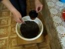 Пересадка фиалки с заменой шнура фитильного полива.